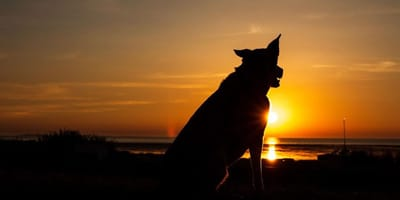 Perle an der Nordsee: Urlaub mit Hund in Cuxhaven