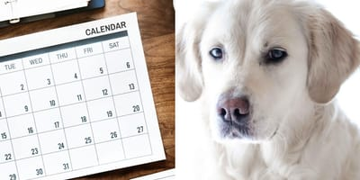 Find out what dog breed you are based on your birth month!