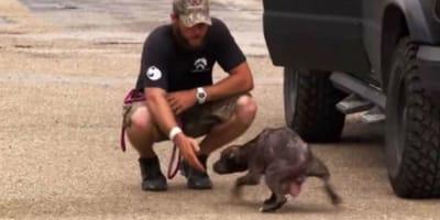 La corsa contro il tempo di una mamma Pitbull per salvare i cuccioli