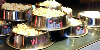 Popcorn being served in dog bowls