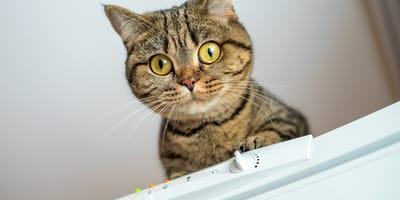 Die Katze ist aufgeschreckt und warnt vor einer Gefahr