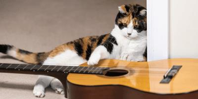 kot_gra_na_gitarze