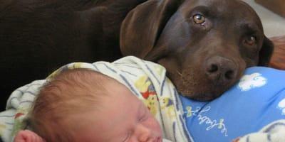 Pies warczy na nianię. Wkrótce rodzice odkrywają straszną tajemnicę