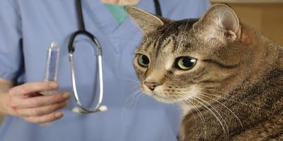 Castración de gato: Cuándo y cómo realizarla y recomendaciones