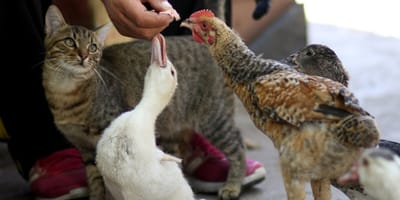 """Zamiast wyrzucać – oddają głodnym zwierzętom. Wspaniała idea """"zero waste""""!"""