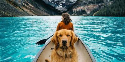 Aspen - pies, który przygód się nie boi!