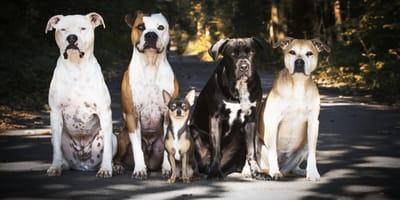Listenhunde in Sachsen Anhalt