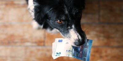 Hund mit Geld im Maul: Hundesteuer