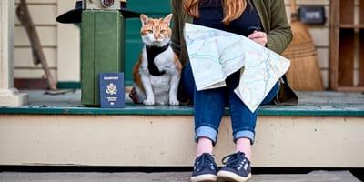 Paszport dla kota - jak go wyrobić, ile to trwa i jaka jest cena?