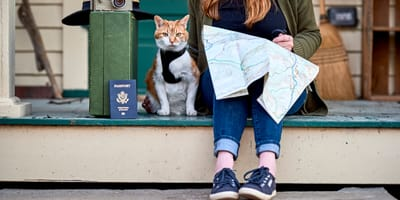 kot w podróży