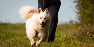 Hundesport Mantrailing: Mit dem Vierbeiner auf Spurensuche