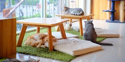 Hotel dla kota – czym się kierować podczas wyboru?