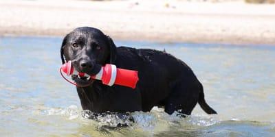 Sonne, Meer und Erholung: Urlaub mit Hund in Grömitz