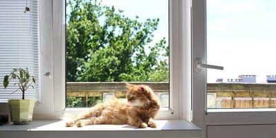 gatto-rosso-sulla-finestra