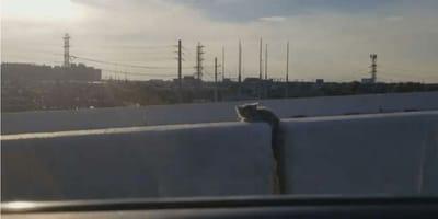 kot_uwieziony_na_autostradzie