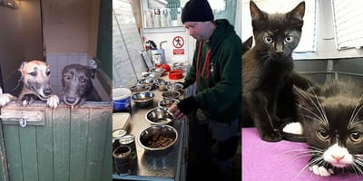 Prestatyn-based Abandoned Animals Association runs out of money