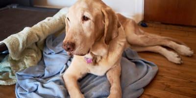 cuidados perros senior