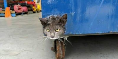 testa-di-gatto-nella-spazzatura-blu