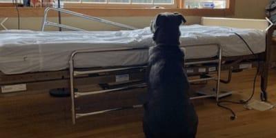 Cane aspetta padrone morto: la foto commuove ma avviene un miracolo