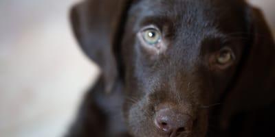 Horner-Syndrom beim Hund