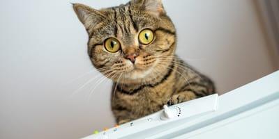 Kot odkrywa coś za lodówką i kamienieje. Wtedy opiekun wzywa straż pożarną