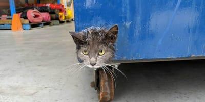 Katze im Müllcontainer