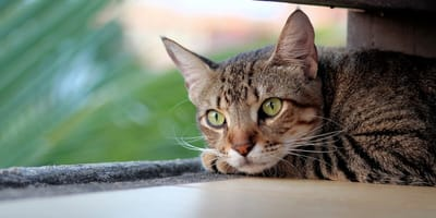Kocie oczy – co może nam powiedzieć spojrzenie kota?
