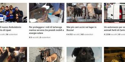 raccolta fondi per animali