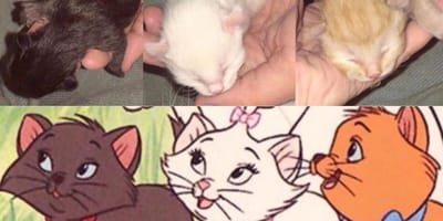Kittens look exactly like the Artisocats