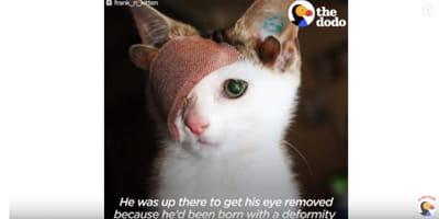 gatto con benda