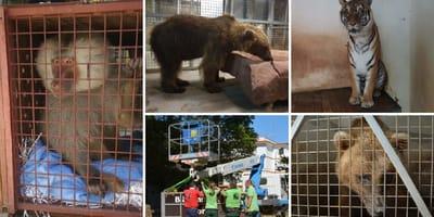 rescate animales zoo ayamonte huelva