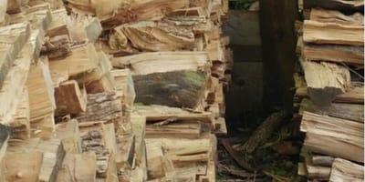 Czy znajdziesz kota pośród stosu drewna  w mniej niż 10 sekund?