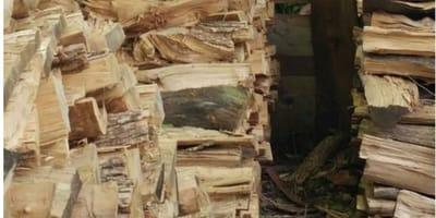 fotografia viral gato camuflado troncos