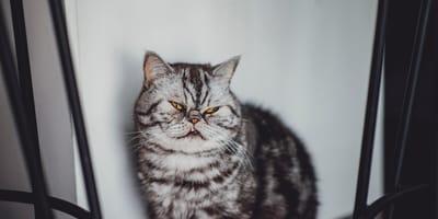 Gato anciano: Síntomas y cuidados especiales en la vejez