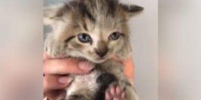 Das völlig verängstigte Katzenbaby