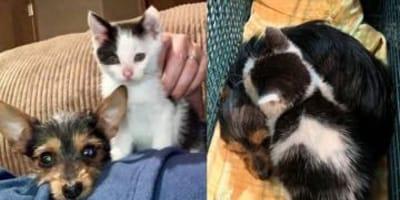 cuccioli di gatto e cane insieme