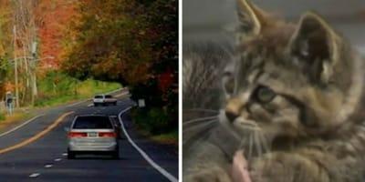 auto-sulla-strada-e-gatto-tabby