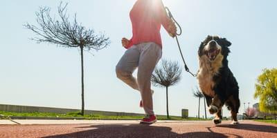 Welche Hunderassen joggen gerne mit Herrchen und Frauchen?