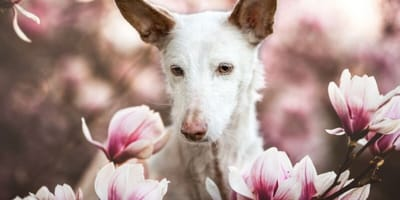 Ddeaf 14 year old rescue dog is winner of Kennel Club photogrpahy competition 2019