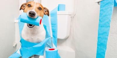 Como evitar que un perro orine dentro de casa