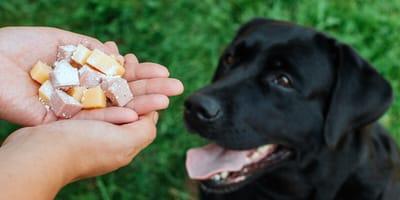 como detectar veneno para perros
