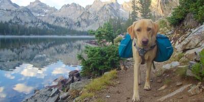 Über Berg und Tal: Diese Hunderassen sind echte Wanderfreunde