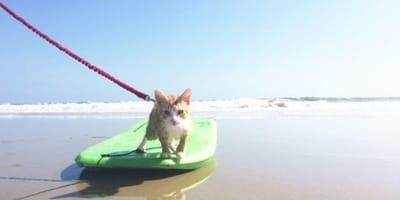 gatto-su-tavola-da-surf-verde