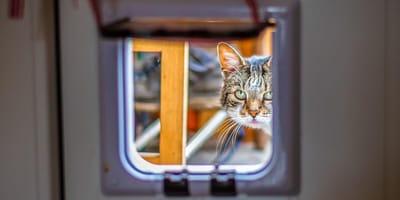 Cat looking through cat flap