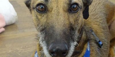 Gary, Britain's loneliest dog, finds an adopter