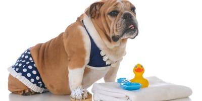 Trajes de baño para perro: ¿por qué ponerle uno?