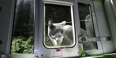 gatto davanti una gattaiola chiusa