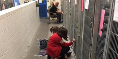 People calm shelter dogs during fireworks