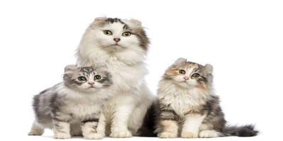 Numero de gatos en España