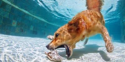 Dog Diving: Der Lieblingssport von vierbeinigen Wasserratten